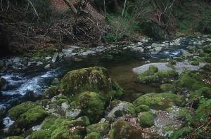 river_nature-lg51