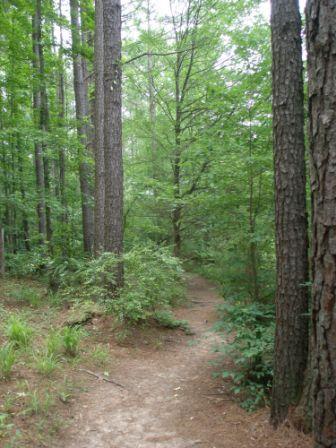 go-trail-running-blog-resize