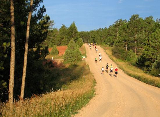 lean-horse-running-down-a-trail
