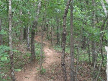 trail-running-trail